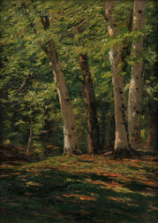 Charles Partridge Adams (American, 1858-1942)      Vermont Beech Trees