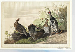 Audubon, John James (1785-1851) Spotted Grouse  , Plate CLXXVI.