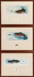 Three Signed Engravings of Trout Species Framed Together with Tied Fishing Flies