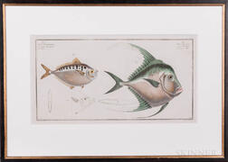 Bloch, Marcus Elieser (1723-1799) Sixteen Fish Prints.