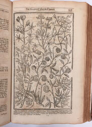 Parkinson, John (1567-1650) Paradisi in Sole Paradisus Terrestris. Or, A Choise Garden of all Sorts of Rarest Flowers.