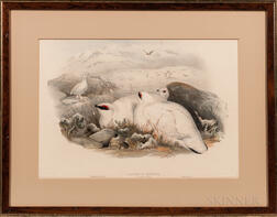 Gould, John (1804-1881) and Henry Constantine Richter (1821-1902) Two Ptarmigan Prints: Lagopus Mutus.