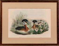 Gould, John (1804-1881) and Henry Constantine Richter (1821-1902) Two Grebe Prints: Podiceps Rubricollis and Podiceps Nigricollis.