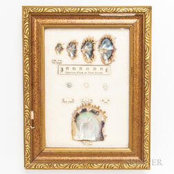 Framed Pearl Growth Chart