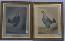 Pair of Oak Framed English Hand-colored Lithograph Portraits of Fighting Cocks