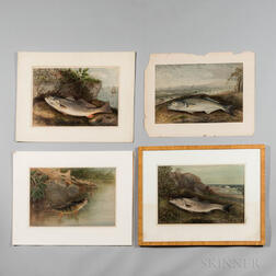 Four Chromolithograph Images of Fish