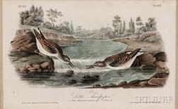 Audubon, John James (1785-1851) Little Sandpiper,   Plate 337, Octavo.