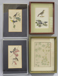 Ornithological and Botanical Prints, 19th Century, Four Framed.
