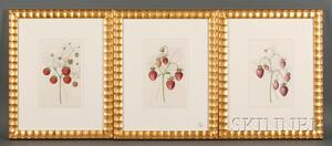 Three Framed Hand-colored Engravings of Strawberries and Raspberries