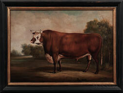 American School, 20th Century      Portrait of a Bull