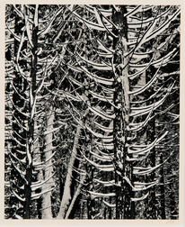 Ansel Adams (American, 1902-1984)      Forest Detail, Winter