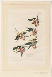 Audubon, John James (1785-1851) Rathbone's Warbler