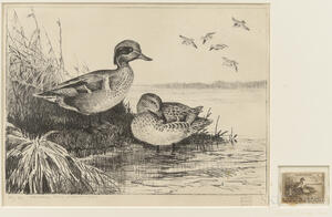 Hunt, Lynn Bogue (1878-1960) Federal Duck Stamp Lithograph, Signed Limited Edition Copy, 1939.