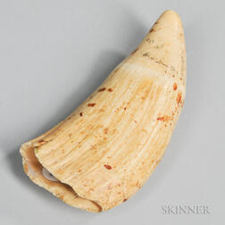 Raw Whale's Tooth