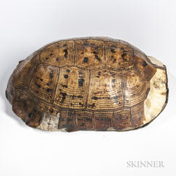 Turtle Shell Ritual Bowl