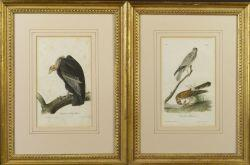 After John James Audubon (American, 1785-1851)  Lot of Two Octavo Edition Ornithological Prints:  Common Harrier
