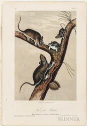Audubon, John James (1785-1851) Octavo Quadruped Plates, Eight.
