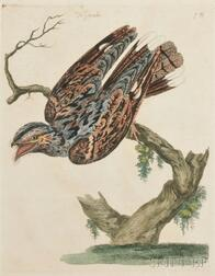 Mazell, Peter (1761-1797) Two Framed Natural History Prints.