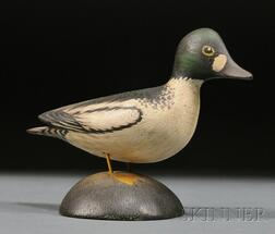 Miniature Goldeneye Drake