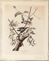 Audubon, John James (1785-1851) Downy Woodpecker,   Plate CXII.