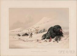 Catlin, George (1796-1872)  Dying Buffalo Bull in Snow Drift.