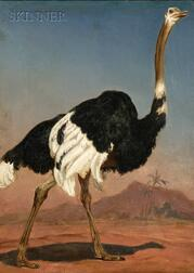 Anglo/American School, 19th Century      Ostrich