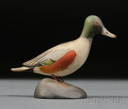 Miniature Northern Shoveler Drake