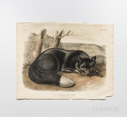 Audubon, John James (1785-1851) American Black or Silver Fox  , Plate CXVI.