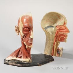 Paint-decorated Two-part Composition Anatomical Head
