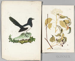 Botanical and Ornithological Prints, Six Hand-colored.