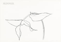Ellsworth Kelly (American, 1923-2015)      Philodendron I