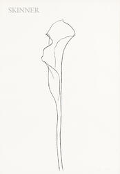 Ellsworth Kelly (American, 1923-2015)      Calla Lilly III