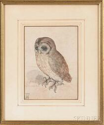After Albrecht Durer (German, 1471-1528)    Photographic Reproduction of The Little Owl