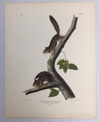 Audubon, John James (1785-1851) Richardson