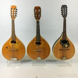 Three Arch-back Mandolins.