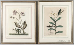 Catesby, Mark (1679-1749) Two Natural History Prints.