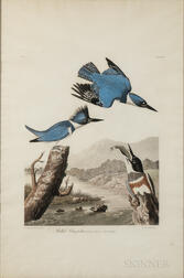 Audubon, John James (1785-1851) Belted Kingfisher  , Plate 77.