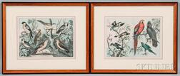 British School, 19th/20th Century      Four Framed Ornithological Prints