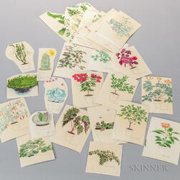 Marinsky, Harry (1909-2008) Forty-nine Original Watercolors of Plants [from] The Womans Day Book of House Plants, by Jean Hersey, c. 1
