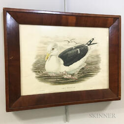 Framed Gould & Hart Hand-colored Lithograph Larus Marinus