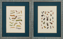 Jaggu Prasad (Indian, b. 1963)      Two Illustrations of Insects: Beetles