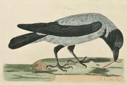 Mazell, Peter (1761-1797) Eight Hand-colored Natural History Engravings: Four Ornithological Prints and Four Quadruped Prints.