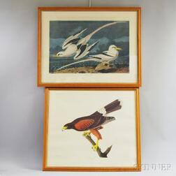 Two Framed Ornithological Prints after Audubon