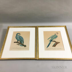Seven Colored Bird Lithographs