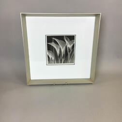 Framed Print of an X-Ray of Flowers