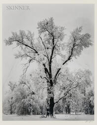 Ansel Adams (American, 1902-1984)      Oak Tree, Snow Storm, Yosemite Valley