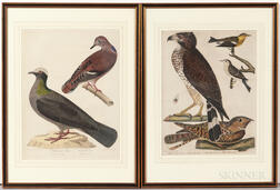 Wilson, Alexander (1766-1813) Plates from American Ornithology   and Bonaparte's Supplement.