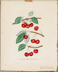 Brookshaw, George (1751-1823) Two Botanical Prints, Cherries and Plums.