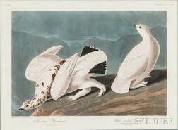 Audubon, John James (1785-1851) American Ptarmigan and White-tailed Grouse  , Plate CCCCXVIII.