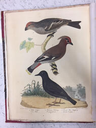 Bonaparte, Charles Lucian (1803-1857) American Ornithology; or the Natural History of Birds Inhabiting the United States, Not Given by